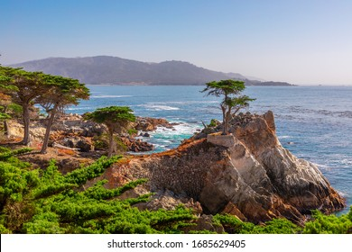 Pebble Beach, California/USA - October 28, 2019: Beautiful lone Cypress tree (Monterey cypress) on 17-mile drive. The tree is a Western icon, and has been called one of the most photographed trees