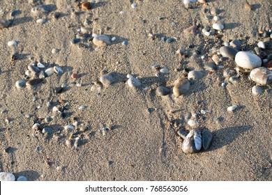 pebble beach, seashore
