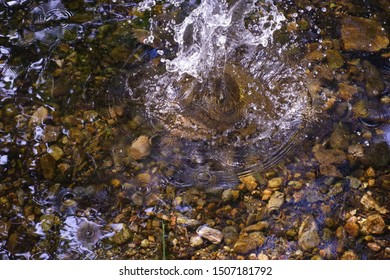 Pebble falling into pond causing a splach of water