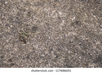 Pebbledash floor texture (with trod in grass).