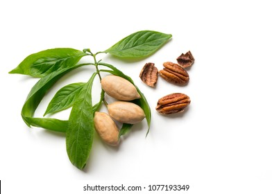 Pecan nuts with green leaves. Top view. Isolated food on white background.