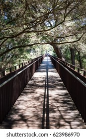 Pedestrian Bridge with tree branches crawling across in King's Park, Western Australia.