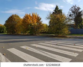 Pedestrian crossing in autumn on sunny day. Autumn landscape along the road on which there is a crosswalk with white stripes.