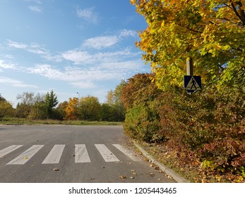 Pedestrian crossing in the autumn in sunny day