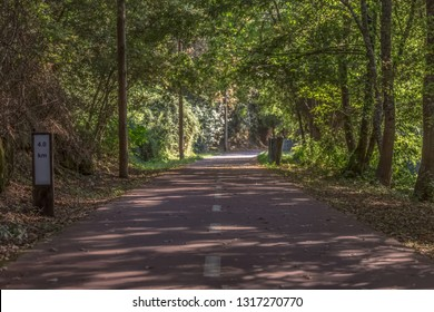 Pedestrian and cycle eco path, trees and vegetation, in Viseu, Portugal