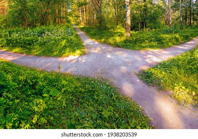 The pedestrian footpaths intersect in the park in summer in sunny weather