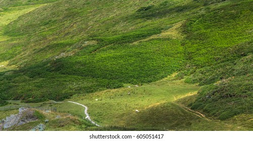 Pedestrian hiking trails on the slopes of the northern borega Devon. Near to Woolacombe and Mortehoe. England
