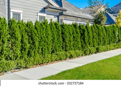 Pedestrian sidewalk at the empty street with nicely trimmed bushes, green fence in a nice neighborhood in the suburbs of Vancouver, Canada. Landscape design.