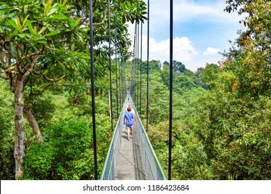 Pedestrian Treetop Walking Bridge in Southeast Asian Jungle / National Park (Summer) - Singapore