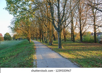 Pedestrian walkway with trees during sunset