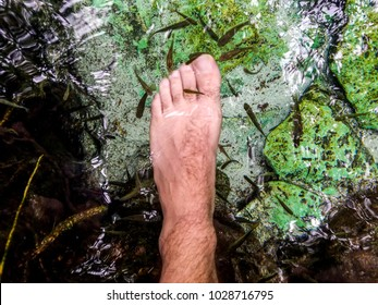 pedicure by fish in a cenote in Mexico