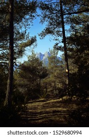 Pedraforca Mountain View from the forest, Catalonia