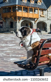 Pedro the Saint Bernard dog is one of the symbols of the city, outside the Centro Civico, San Carlos de Bariloche, Nahuel Huapi National Park, The Lake District, Argentina
