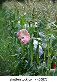 Peek.. a little boy peeking between some corn stalks.