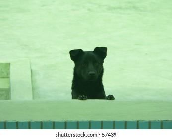 peek peep dog