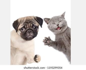 Peeking cat and dog behind white banner. isolated on white background.