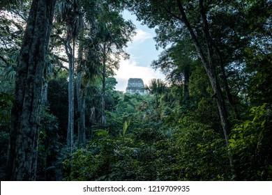 Peeking through dense Jungle towards the Temple of Tikal in Guatemala