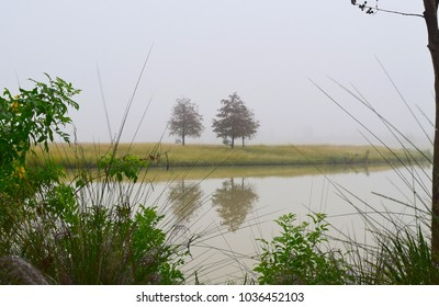 Peeking through tall grass you come across a lake which shows you a small island on the other side misty and foggy with a few trees.