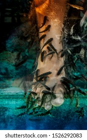 Peeling feet small gray fish Harry roof. Pedicure. Cosmetic SPA procedure. Aquarium with Harry roof. Fish peeling.