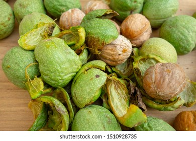 Peeling of walnuts. Close-up of green peel, rind or cover of nuts. Seasonal autumn harvest processing preparation of organic food before storage