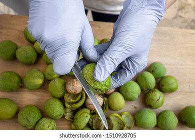 Peeling of walnuts. Hands in gloves peel by knife a green rind or cover of nuts. Seasonal autumn harvest processing preparation of organic food before storage