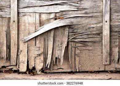 Peeling wood