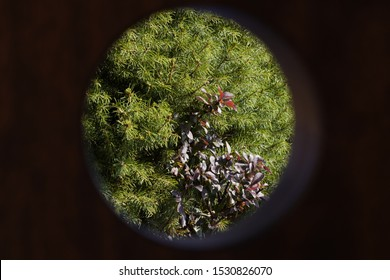 peeping through the hole, green trees visible through the hole, spruce