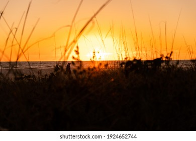 Peering through the beach grass at the glowing Orange Sunset setting over the ocean on Marco Island white sand beach Silhouetted Dunes Out of Focus Depth of Field