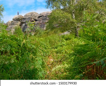 Peering through dense undergrowth and tall ferns to the top of Birchen Edge. In the distance a lone climber stands on the cliff top