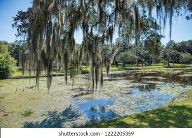 Peering Through Mossy Branches Overlooking Swamp at Avery Island Louisiana