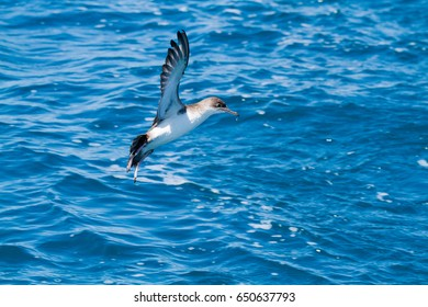 pelagic bird living alive lives all the way to sea viareggio italia