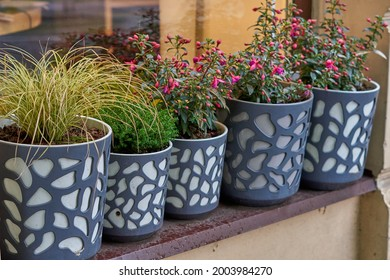 Pelargonium and geraniums in flower pots on the windowsill of a rural house outside against a terracotta-colored wall. . High quality photo