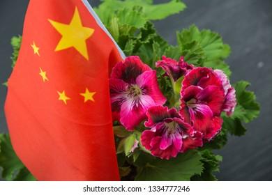 Pelargonium, pink flowers of pelargonium with China flag