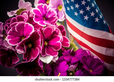 Pelargonium, purple flowers of pelargonium with USA flag