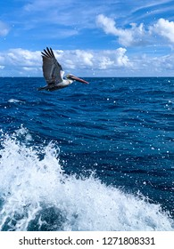 A pelican in flight flies in front of a dark blue ocean and a bright blue sky on a sunny, cloudy day as waves crash below it.