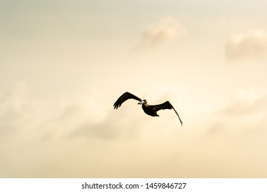 A Pelican flying over the ocean looking out foor fish as food