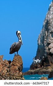 Pelican at Lands End in Cabo San Lucas Baja Mexico