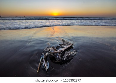 A pelican lying on the beach with the sea trying to bring its death body to a better life