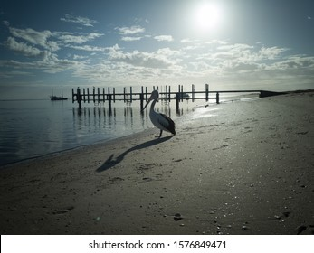 Pelican with a nice shadow on Monkey Mia beach during sunrise