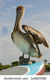 Pelican on the boat, Mexico.