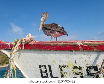 Pelican on a boat 