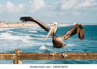 Pelican on the pier in Oceanside, San Diego County, California