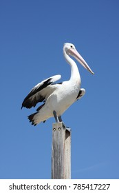 Pelican on a pole against a blue sky