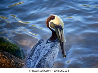 pelican with plastic tube in its beak product of pollution