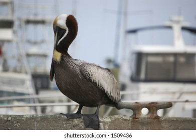 A pelican rests on a perch at the Ponce Inlet Florida marina