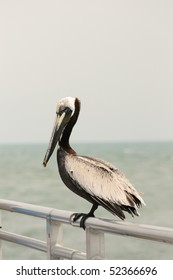 Pelican sitting on a metal railing on Cocoa Beach, Florida Pier (2)
