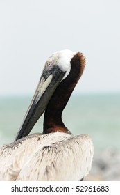 Pelican sitting on a metal railing on Cocoa Beach, Florida Pier