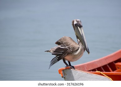 Pelican standing on a fisher boat in the bay of Pampatar. Isla Margarita is the largest island in the state of Nueva Esparta in Venezuela