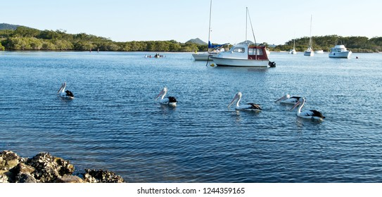 Pelicans and boats on Myall Lake in Australia.