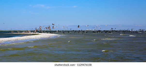 Pelicans flying over the sea cost